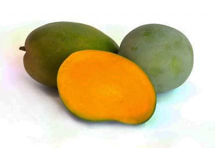 Keitt-Mango.jpg