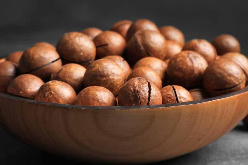 macademia-nuts2.jpg